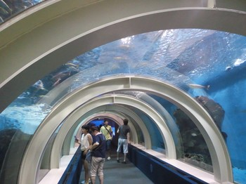 水族館トンネル.JPG