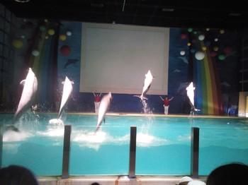 海豚ジャンプ.JPG