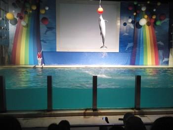 海豚ボール.JPG